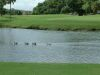 golf-course-for-web-site-045